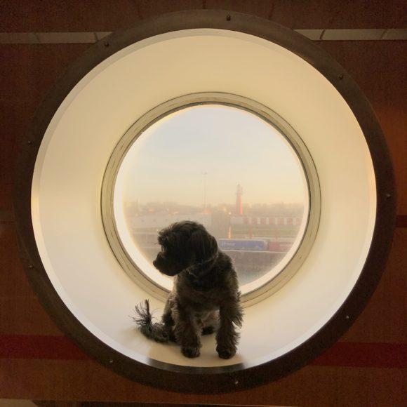 Dog Grooming Liverpool Nsw