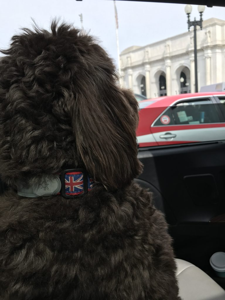 Dog Grooming Regulations Indiana