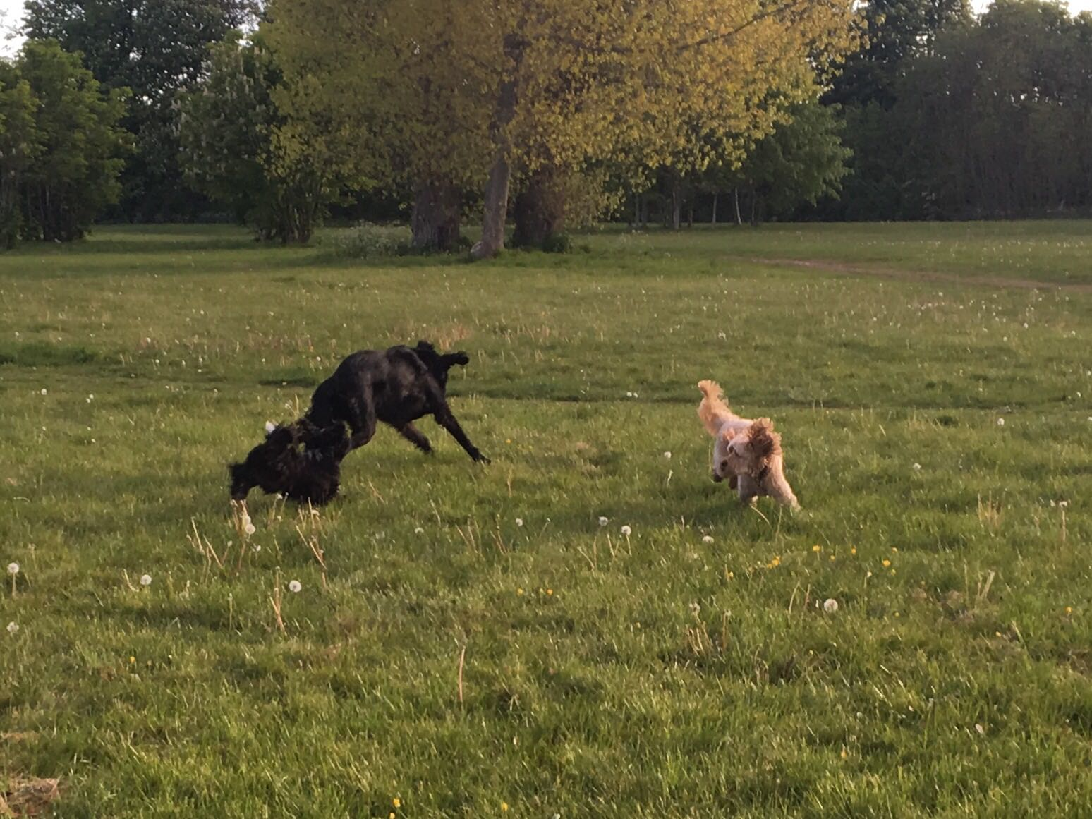Image Result For Lucky Dog Training