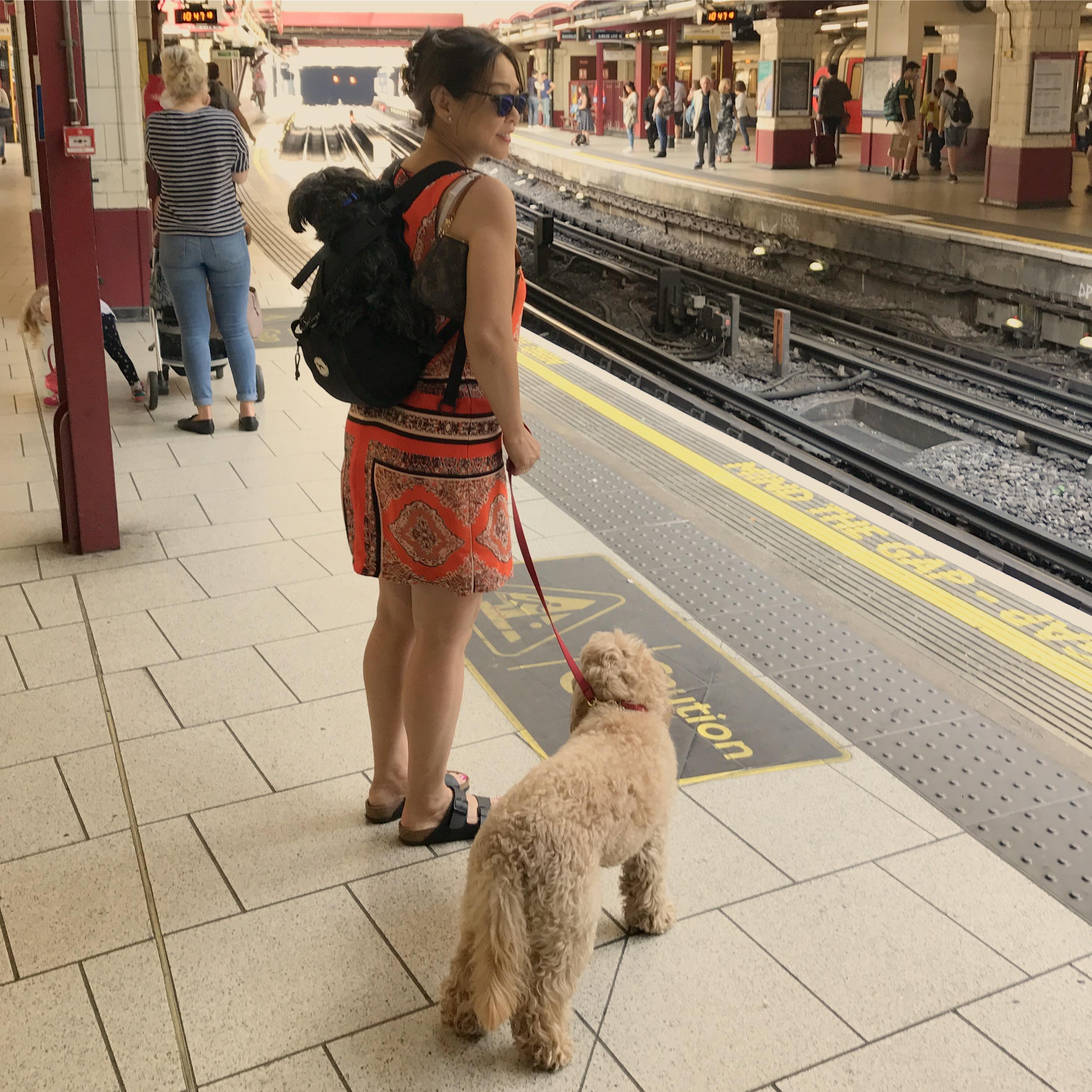 Training Dog Backpack