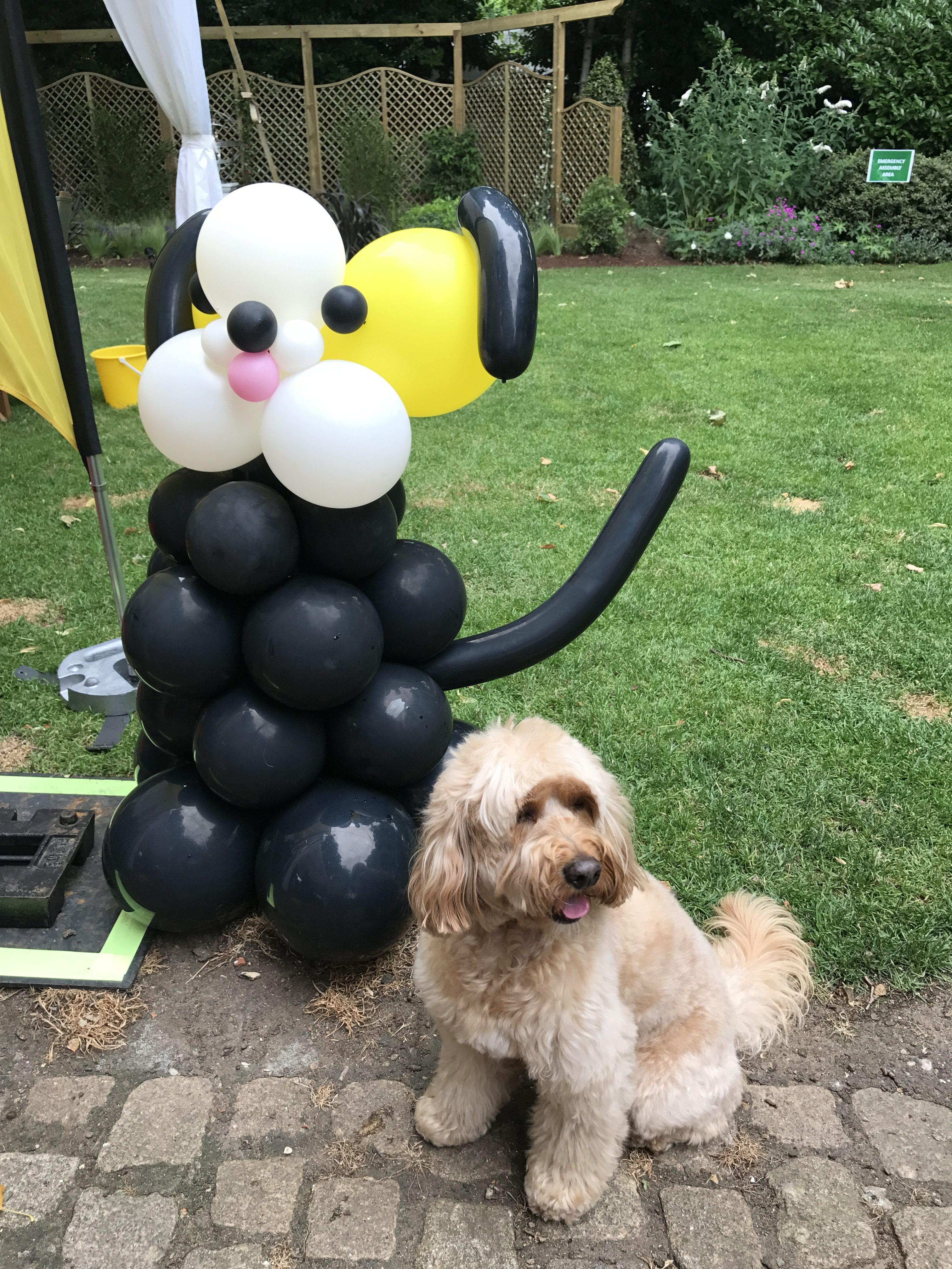 Dog Friendly Fringe Shows