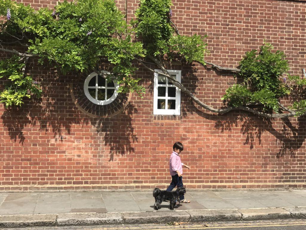 Barkley Dog Walking