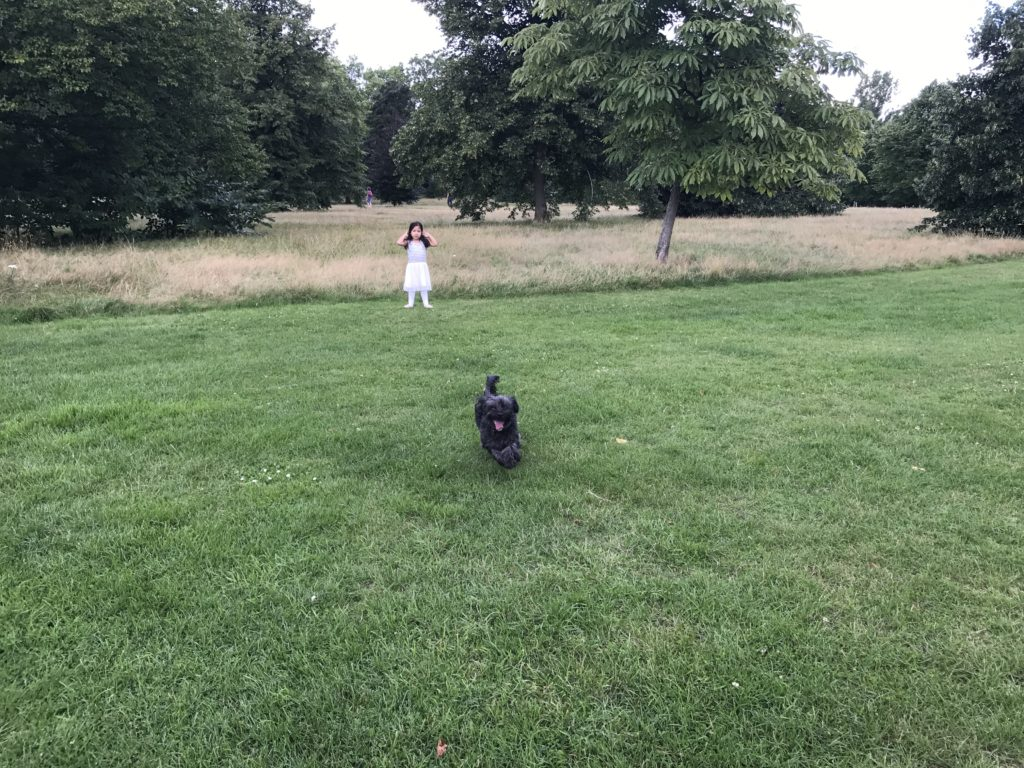 Legged Dog Walks Like Human