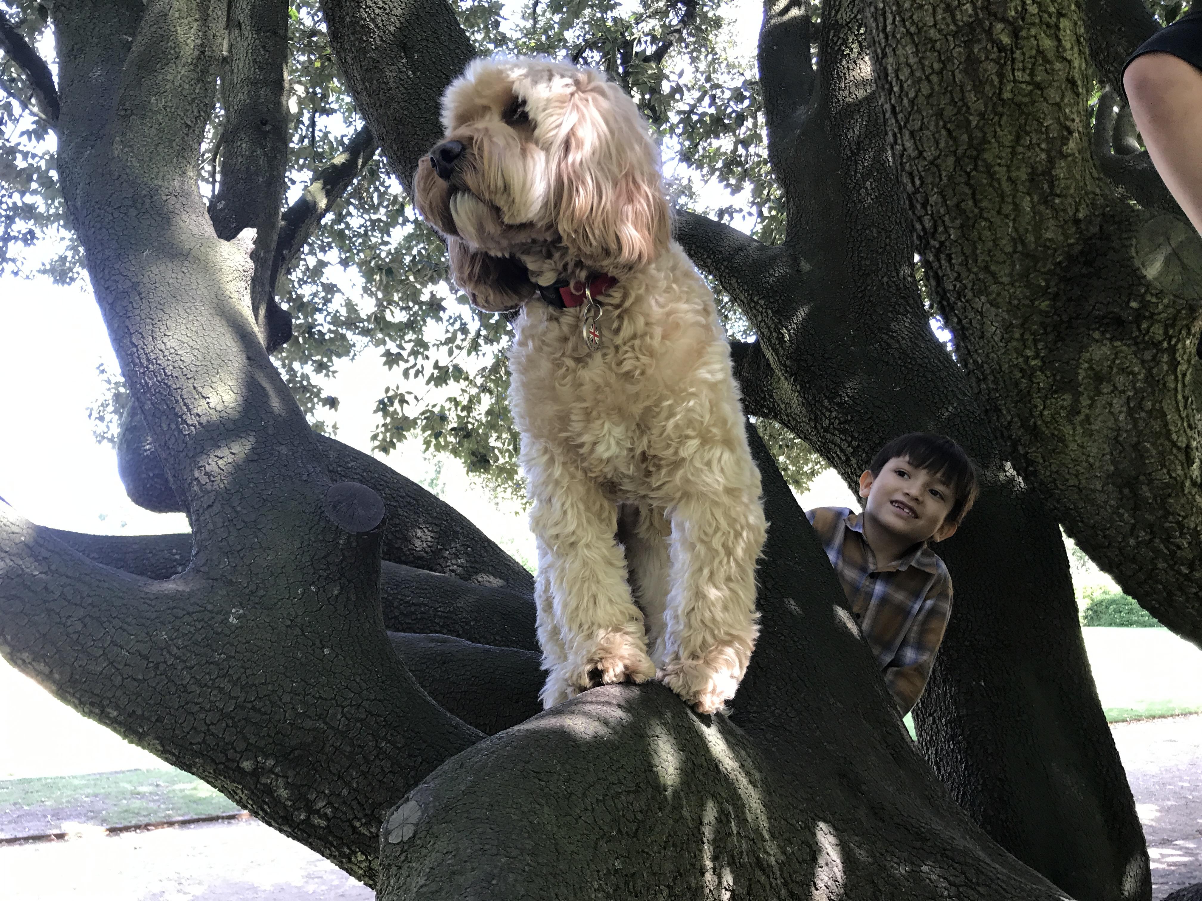 Dog Training Chiswick