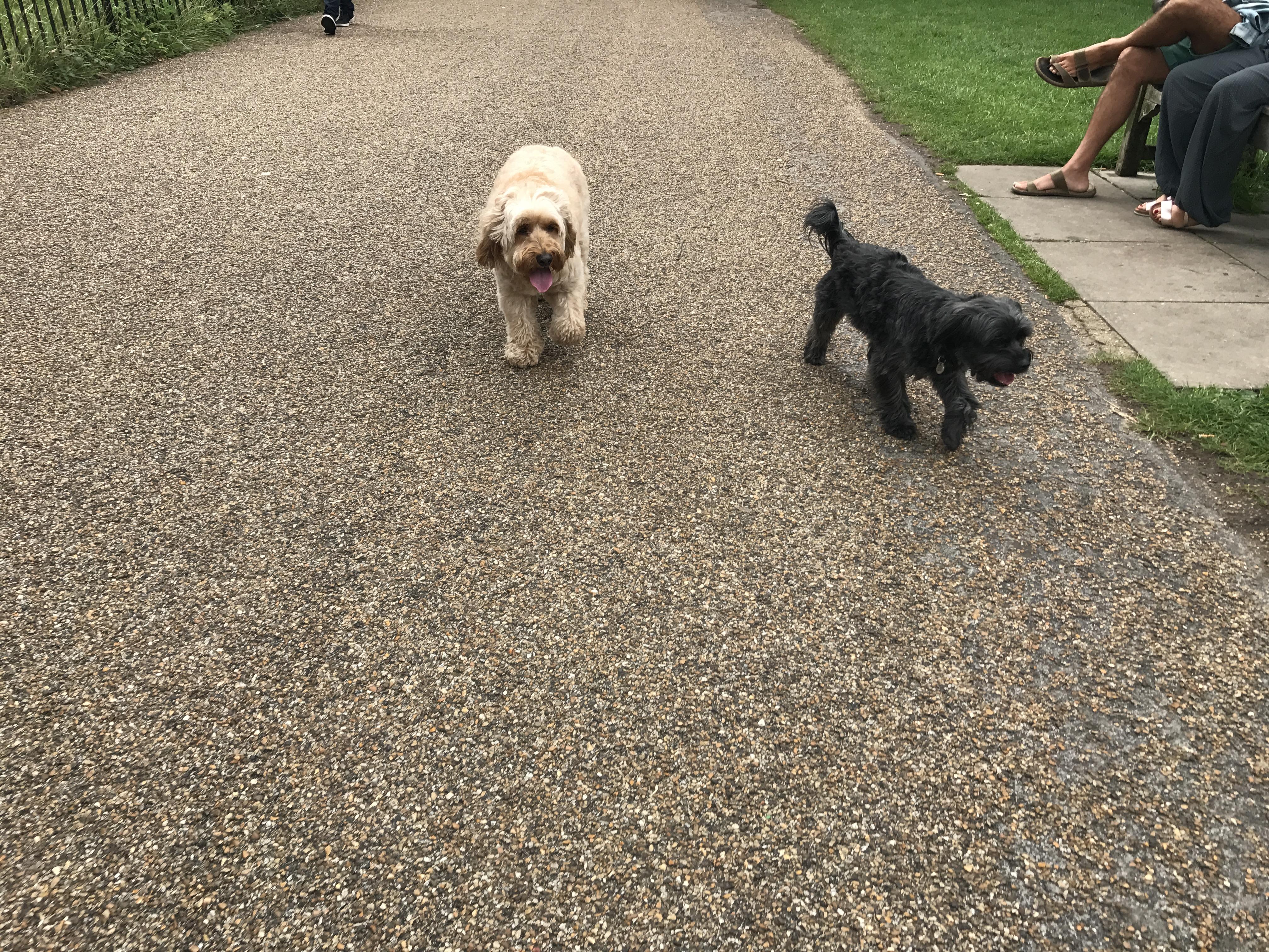 Dog Training Excited Urination
