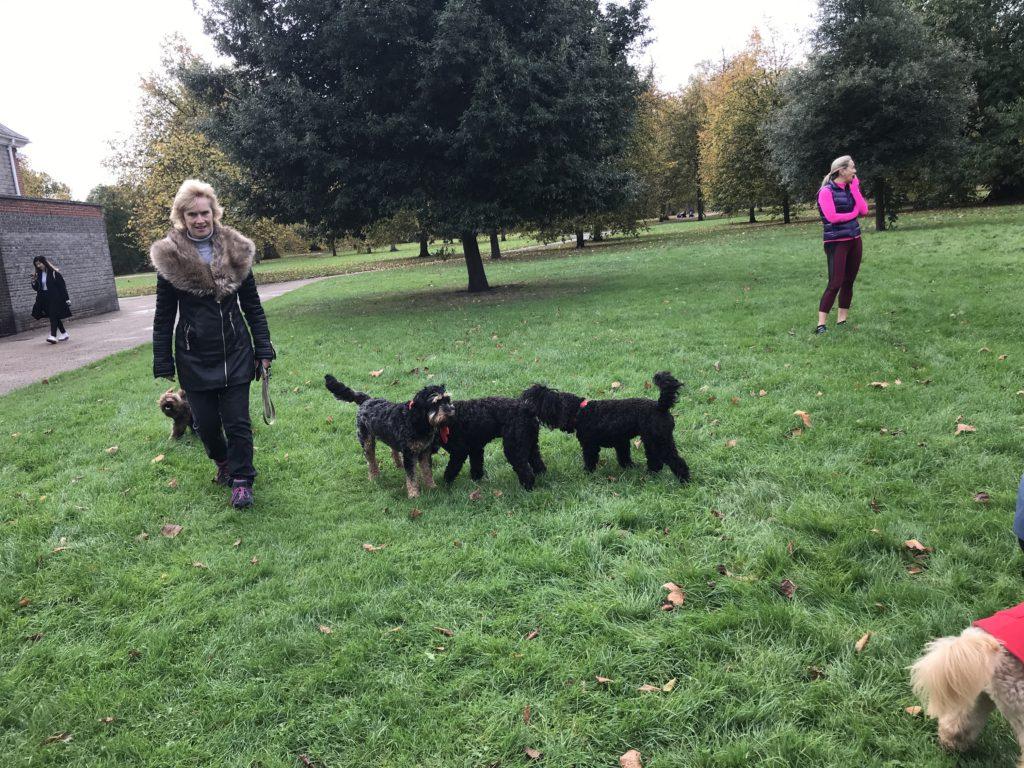 Dog Trainer Tricks Training Washington State Vancouver