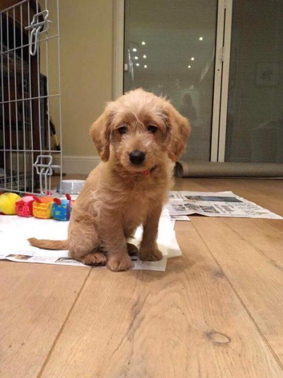 Dog Grooming Richmond Surrey