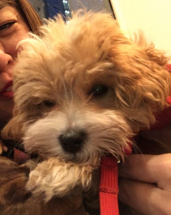 Dog Friendly Stores Arlington Va