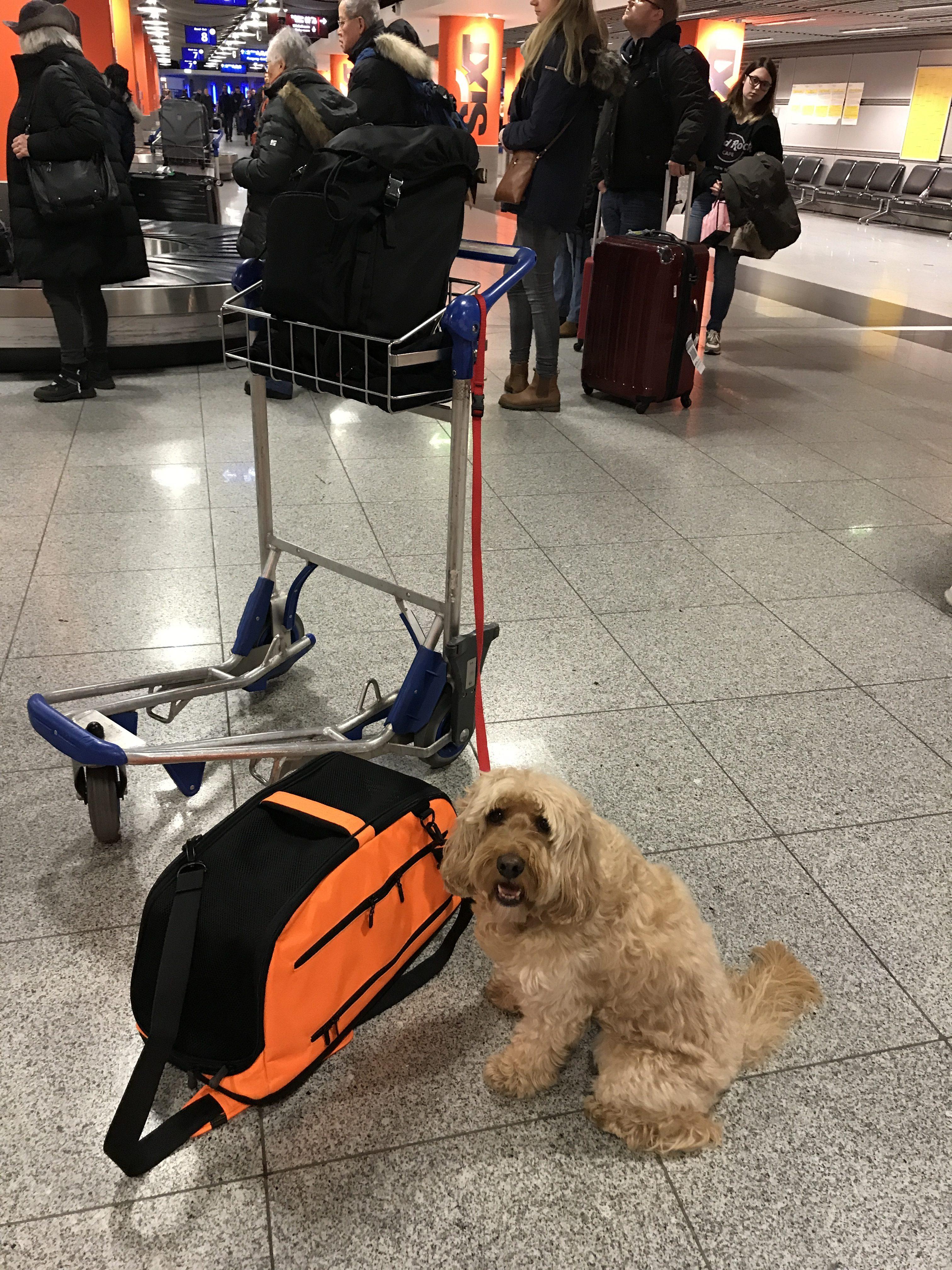 Dog Carrier Backpack Australia