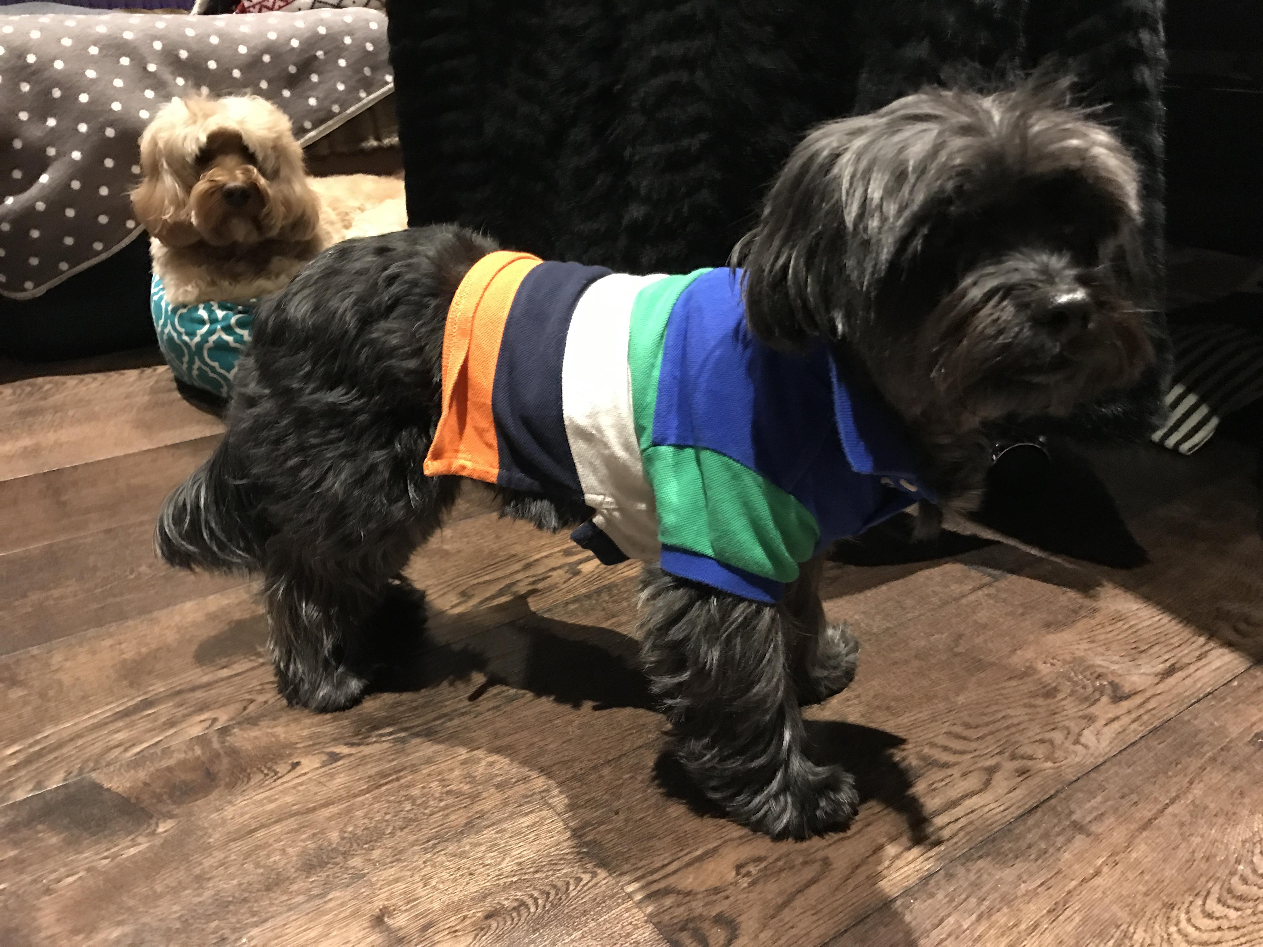Polo Ralph Lauren Dog Clothes的圖片搜尋結果