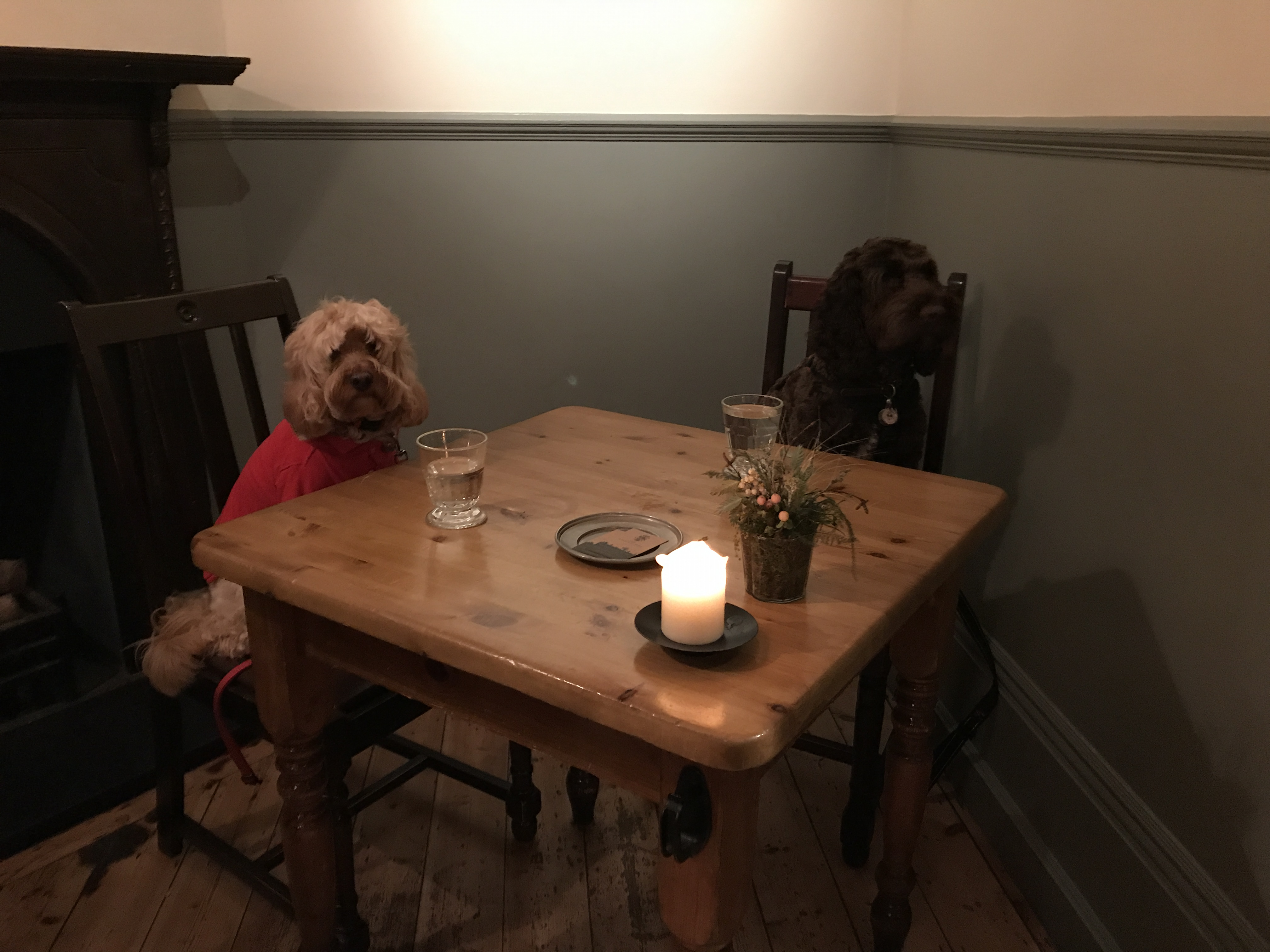 Dog Friendly Pubs North Devon