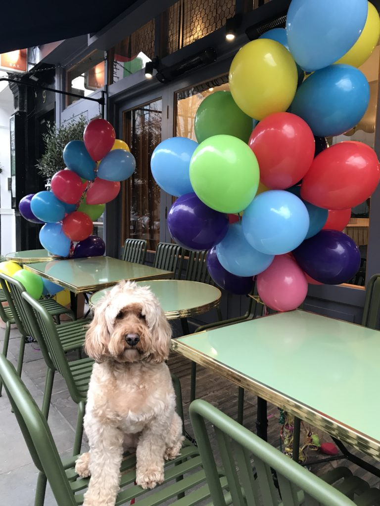 Dog Friendly Cafe Leeds