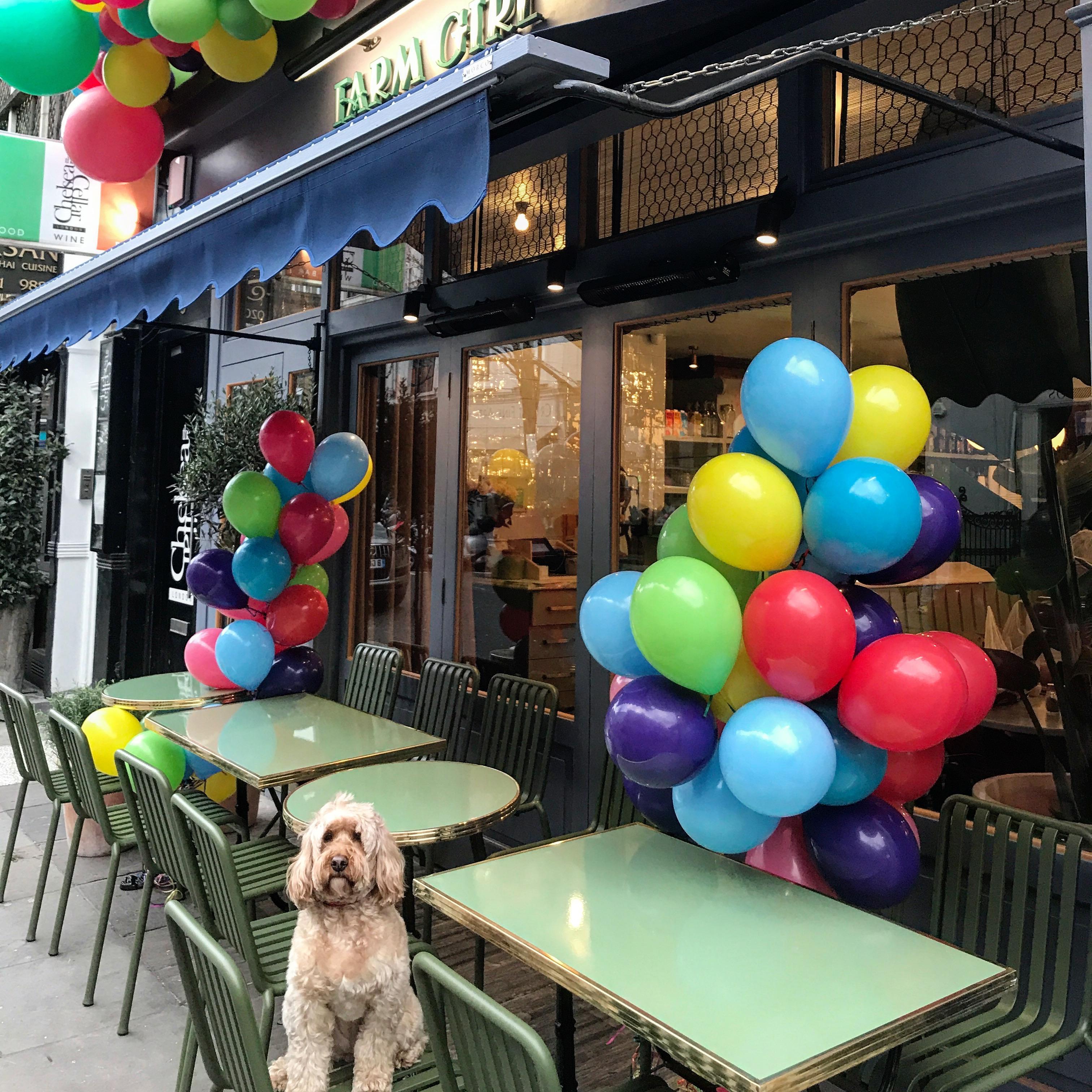 Dog Friendly Restaurants Key Largo