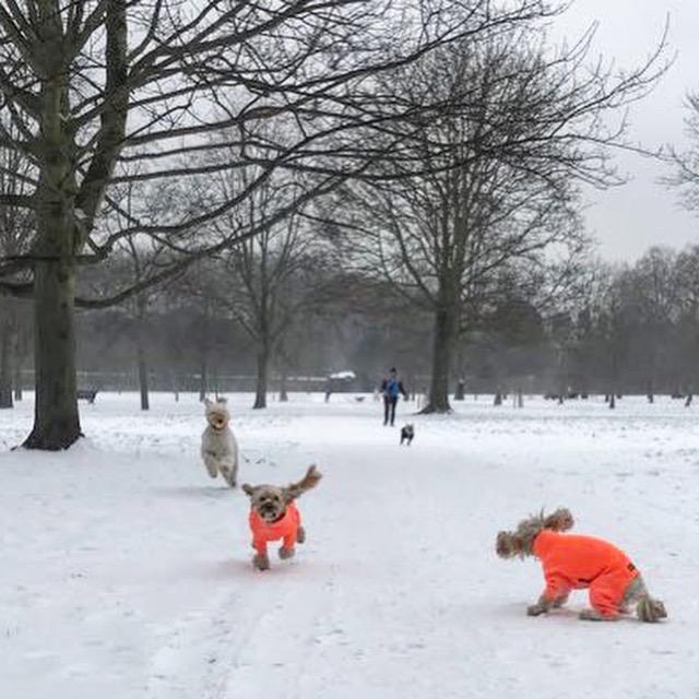 Walkies Dog Training Woman