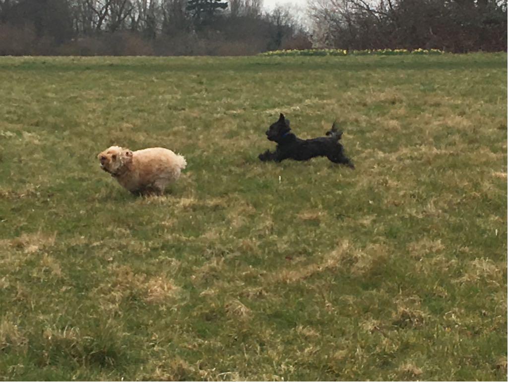 Image Result For Dog Training Winston