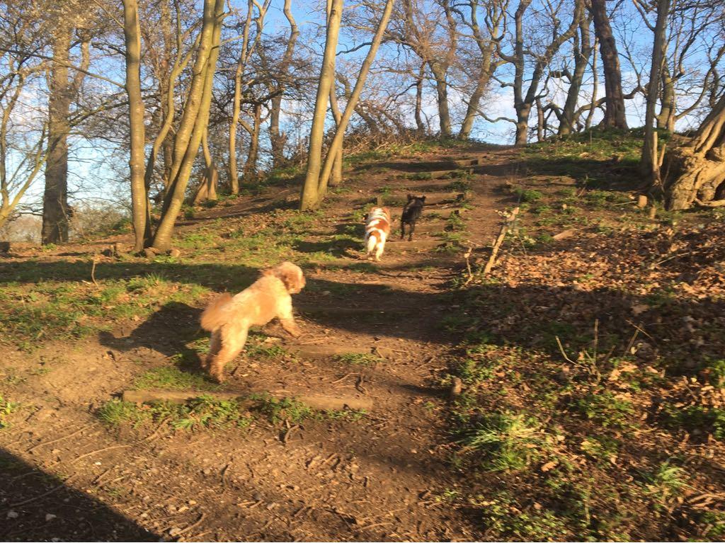 Dog Friendly Walks Near Rugeley