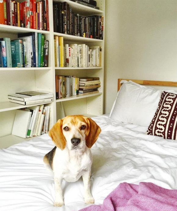 Dog Rescue Sussex