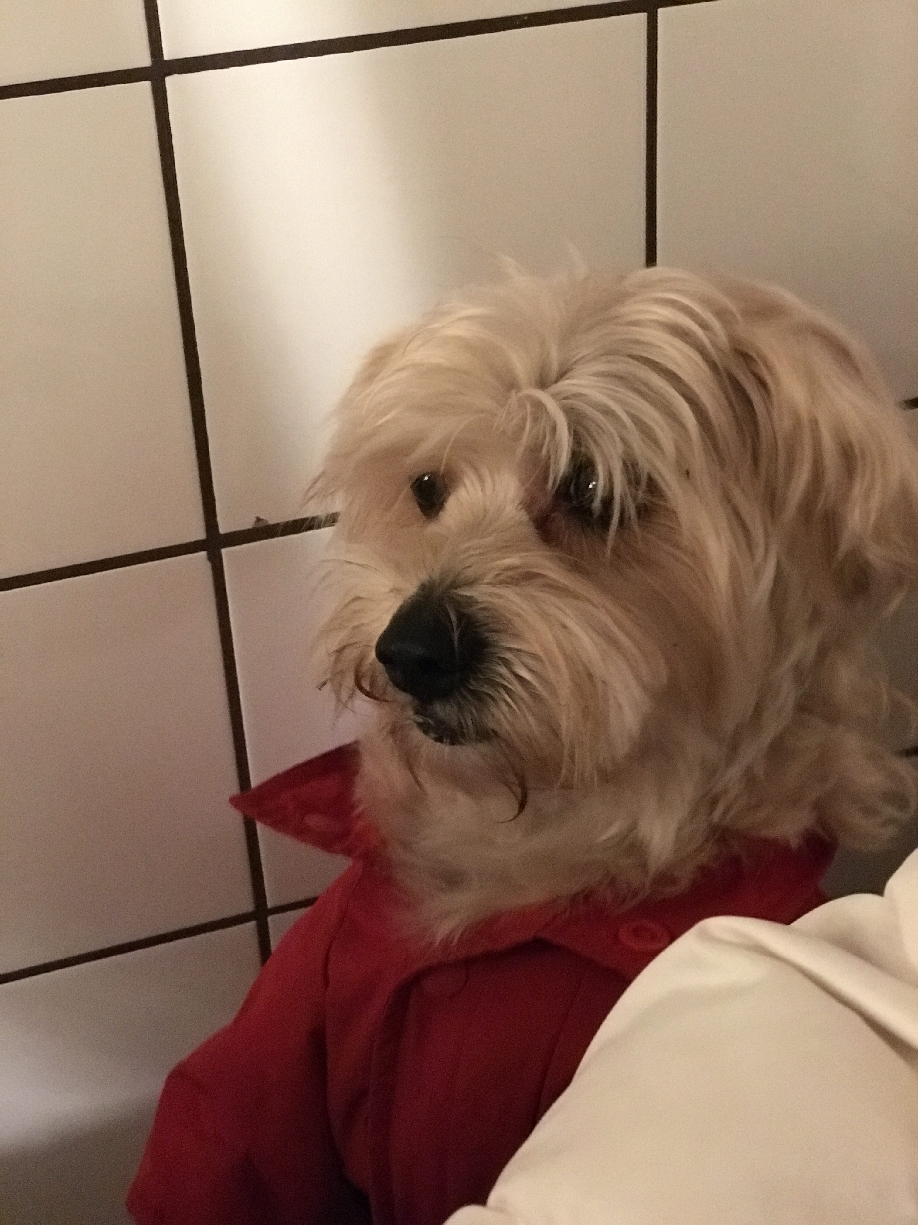 Marley S Dog Rescue Poole
