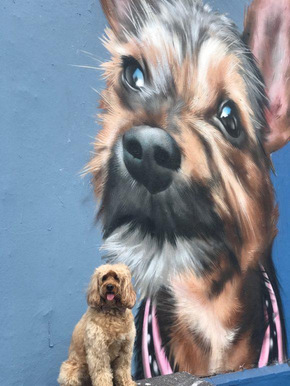 Dog Friendly Cafes Corindi Beach