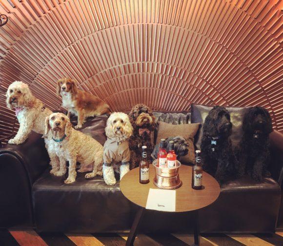 Dog Day Spa Los Angeles