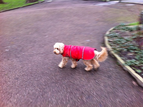 Another red raincoat