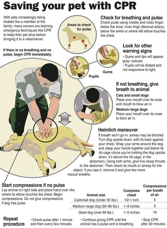 Pet-First-Aid-and-CPR-on-Animals