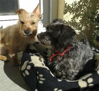 Ernest and Jessie
